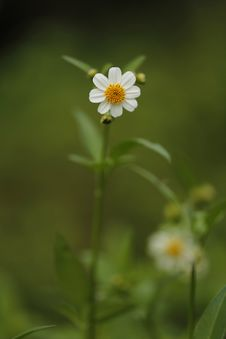Free White Chamomile Flower Selective Focus Photography Stock Photo - 114943880