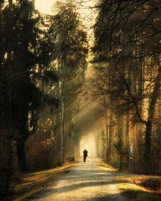 Free Person Standing On Pathway Surrounded By Trees Royalty Free Stock Photography - 114943937