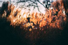 Free Brown Grass Lawn Royalty Free Stock Photos - 114943988