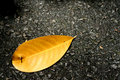 Free Fallen Leaf Royalty Free Stock Photo - 1150225