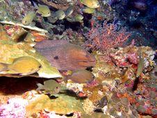 Free Moray Eel Royalty Free Stock Photo - 1152275