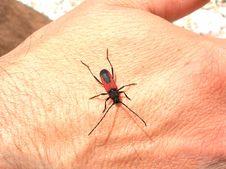 Free Beetle Stock Photos - 1152813