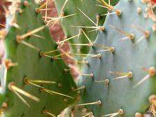 Free Cactus Royalty Free Stock Image - 1152876
