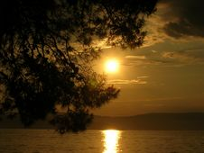 Free Tree Covers Sunset To The Sea Royalty Free Stock Photography - 1153417