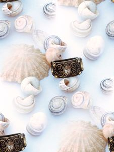 Free Shells And Ring 3 Royalty Free Stock Photos - 1153668