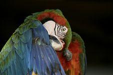Free Macaw!! Stock Photos - 1153923