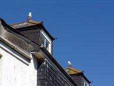 Free Seagulls On Rooftops Stock Image - 1154471