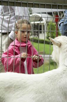Free Young Girl Feat The Goat Stock Image - 1155661