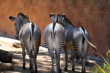 Free Group Of Three Zebras Stock Images - 1158834