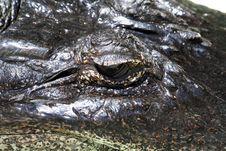 Free Crocodile Eye Royalty Free Stock Photo - 1159035