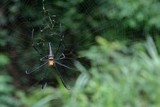 Free Spider Royalty Free Stock Photo - 1159135