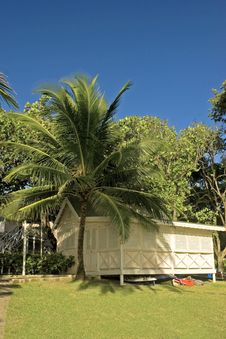 Palm Tree And Chattel Stock Photo