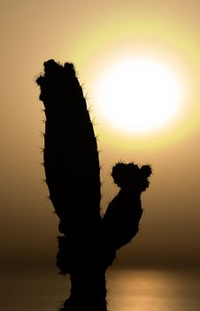 Free Cactus At Sunset Stock Photo - 1159890