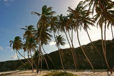 Free Bottom Bay, Barbados Royalty Free Stock Image - 1159896
