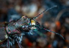 Free Shallow Focus Photography Of Black Insect Royalty Free Stock Image - 115012866