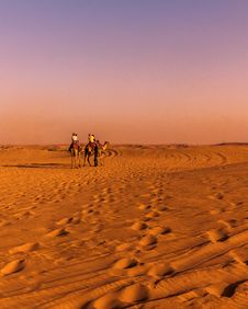 Free Two Brown Camel On Desert Stock Image - 115012871