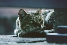 Free Photo Of Silver Tabby Cat Lying On Gray Pavement Stock Image - 115012891