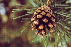 Free Closeup Photography Of Brown Pine Cone Stock Image - 115013001