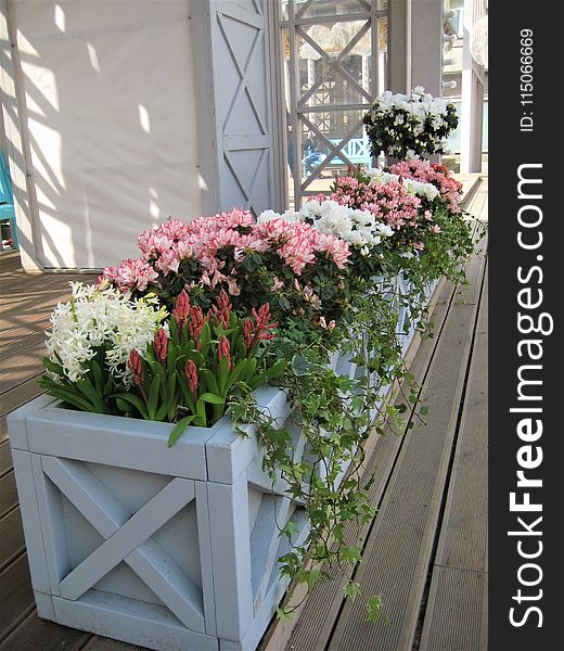 Macro photo with background decorative elements in landscaping and garden design with colorful flowers