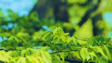 Free Selective Focus Photography Of Green Leaves Stock Image - 115110901