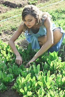 Free Photo Of Woman Planting Stock Photography - 115110942