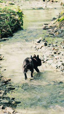 Free Photo Of Dog Running On Stream Royalty Free Stock Photos - 115110948