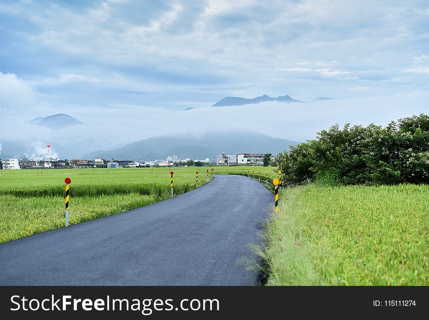 Road Surround by Green Grass