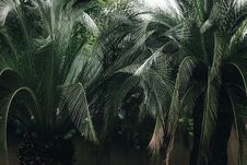 Free Green Leaf Palm Tree Stock Photos - 115203013