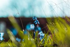 Free Selective Focus Photography Of Blue Petaled Flowers Royalty Free Stock Photos - 115203018