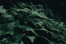 Free Green Fern Plants Royalty Free Stock Photo - 115269025