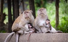 Free Photo Of Monkeys Stock Photo - 115269090
