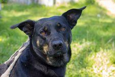 Free Dog, Dog Breed, Dog Like Mammal, Snout Stock Photography - 115286372