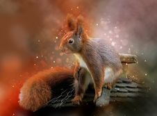 Free Squirrel, Mammal, Fauna, Rodent Stock Image - 115286381