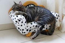 Free Cat, Mammal, Small To Medium Sized Cats, Cat Like Mammal Stock Photo - 115286430