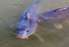 Free Water, Fish, Fauna, Marine Biology Royalty Free Stock Images - 115286539