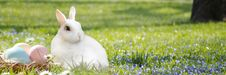 Free Mammal, Grass, Rabbit, Meadow Royalty Free Stock Images - 115286719
