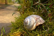 Free Snail, Snails And Slugs, Terrestrial Animal, Molluscs Stock Images - 115287624