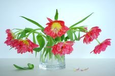 Free Flower, Flowering Plant, Plant, Flower Arranging Stock Photos - 115287743