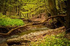 Free Nature, Vegetation, Water, Nature Reserve Stock Photos - 115288003