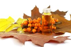 Free Berries Of Sea-buckthorn Berries And Medical Oil Royalty Free Stock Photography - 11536087