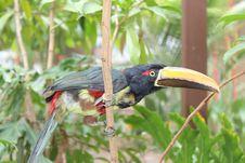 Free Bird, Beak, Hornbill, Fauna Stock Image - 115315351