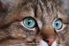 Free Cat, Whiskers, Eye, Fauna Royalty Free Stock Photo - 115315425