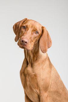 Free Dog, Dog Like Mammal, Dog Breed, Mammal Stock Photo - 115315590
