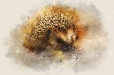 Free Hedgehog, Close Up, Erinaceidae, Organism Stock Image - 115315871