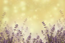 Free Sky, Purple, Lavender, Lilac Stock Images - 115316154