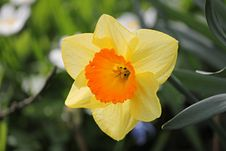 Free Flower, Yellow, Flowering Plant, Plant Stock Photography - 115316242