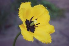 Free Flower, Yellow, Flowering Plant, Plant Stock Photos - 115316253