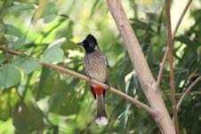Free Bird, Fauna, Beak, Old World Flycatcher Stock Photo - 115316260