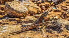 Free Reptile, Scaled Reptile, Lizard, Fauna Stock Photo - 115316410
