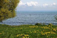 Free Water, Flower, Vegetation, Shore Stock Image - 115316621